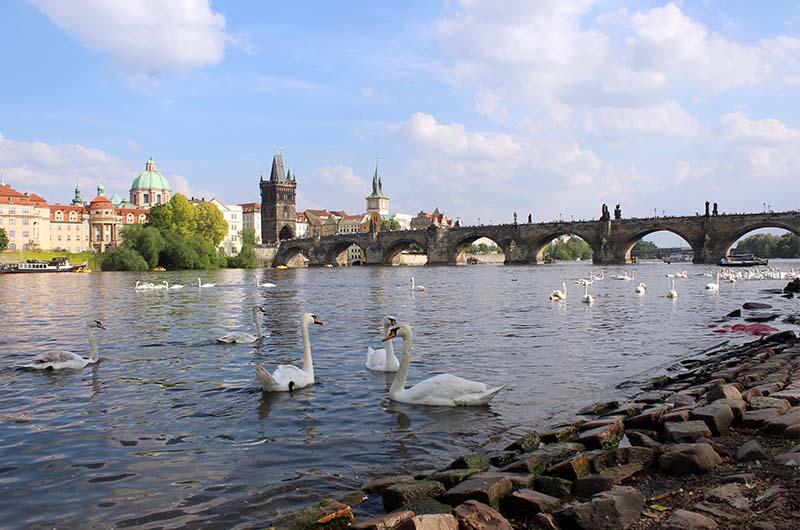 Лебединая гавань в Праге.