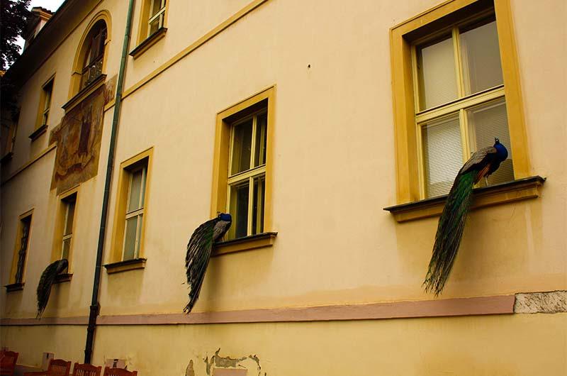 Павлины на этих окнах сидят довольно часто. Ищите их на обзорной террасе.