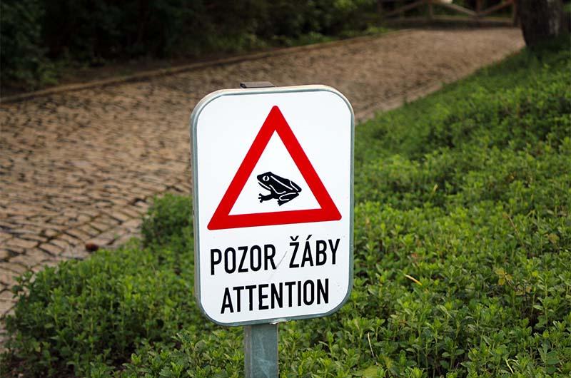 """Табличка с неожиданным предупреждением: """"Внимание, лягушки""""."""
