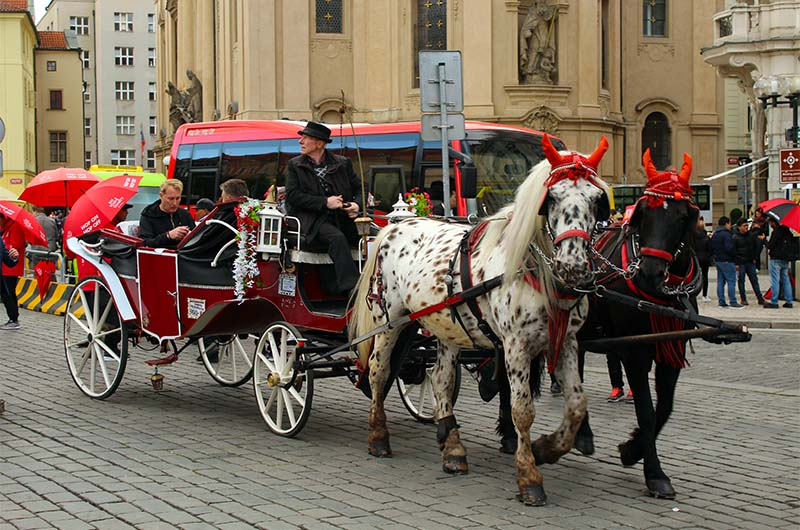 Конные прогулки в Старом городе.